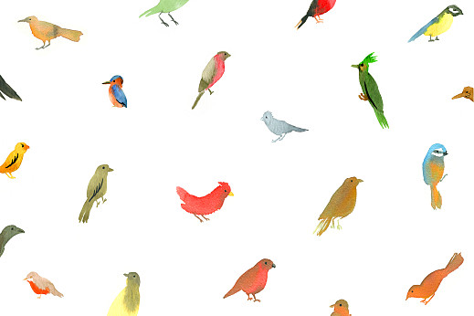 Notecards Bird watching white